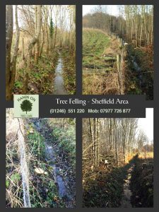 hands on tree care- trees felled in Sheffield
