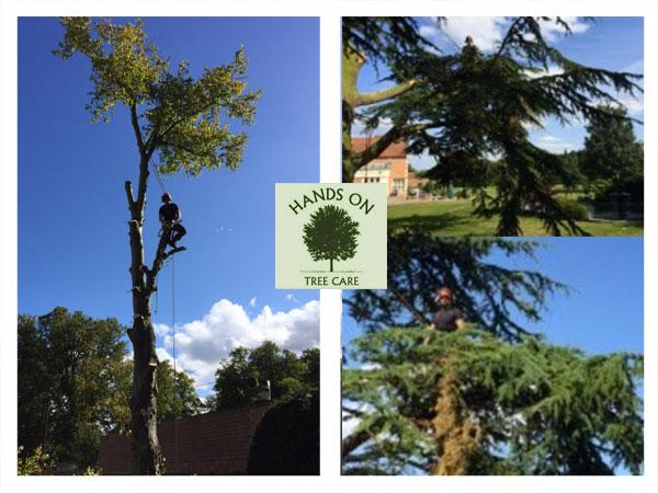 damaged trees pruned