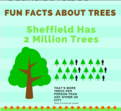 infographc about trees