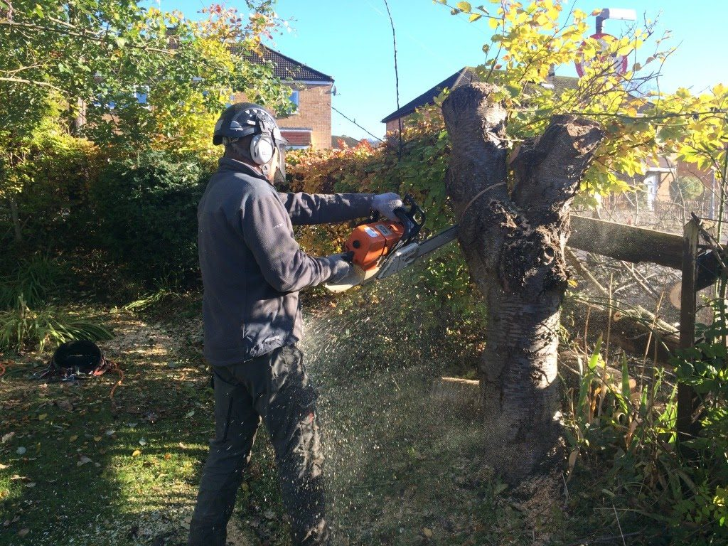cherry tree cut down